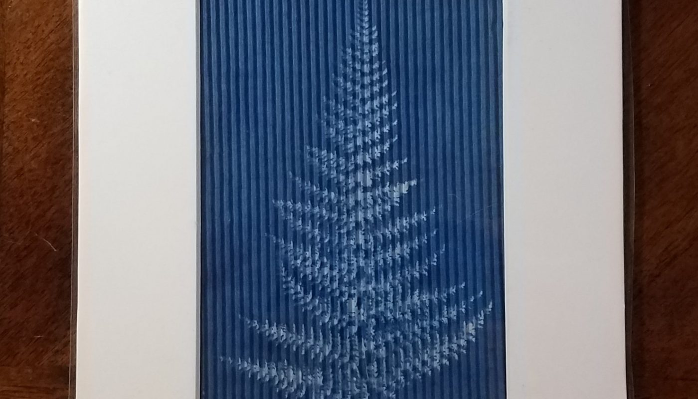 Massachusetts Fern on Corrugated Art Paper